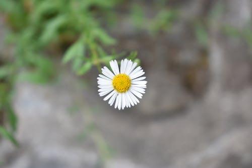 Безкоштовне стокове фото на тему «білий, дика квітка, квітка»