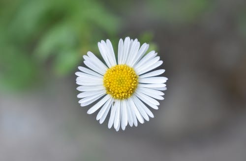 Free stock photo of flower, nature, white flower, wild flower