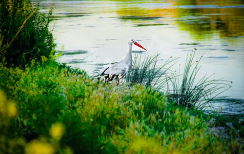Free stock photo of bird, birds, green