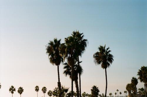 Бесплатное стоковое фото с 35 мм, portra 400, дерево