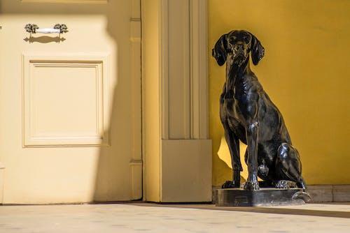 Free stock photo of art, dog, sculpture