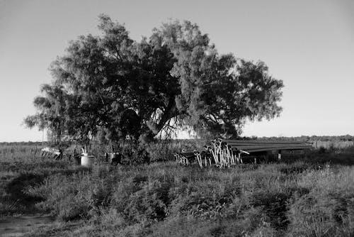 Free stock photo of farm, field, mexico