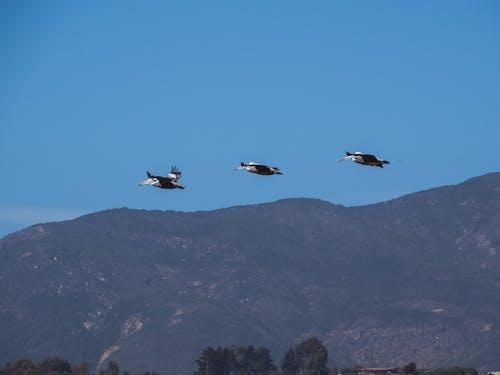 Бесплатное стоковое фото с animales, aves, aves volando, cielo