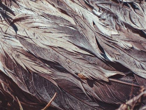 Бесплатное стоковое фото с pluma textura, plumas, plumas aves, plumas pelícano