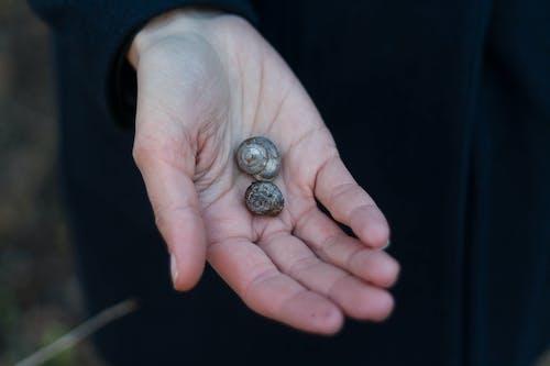 คลังภาพถ่ายฟรี ของ มอลลัสก์, มือ, หอยทะเล, หอยทาก