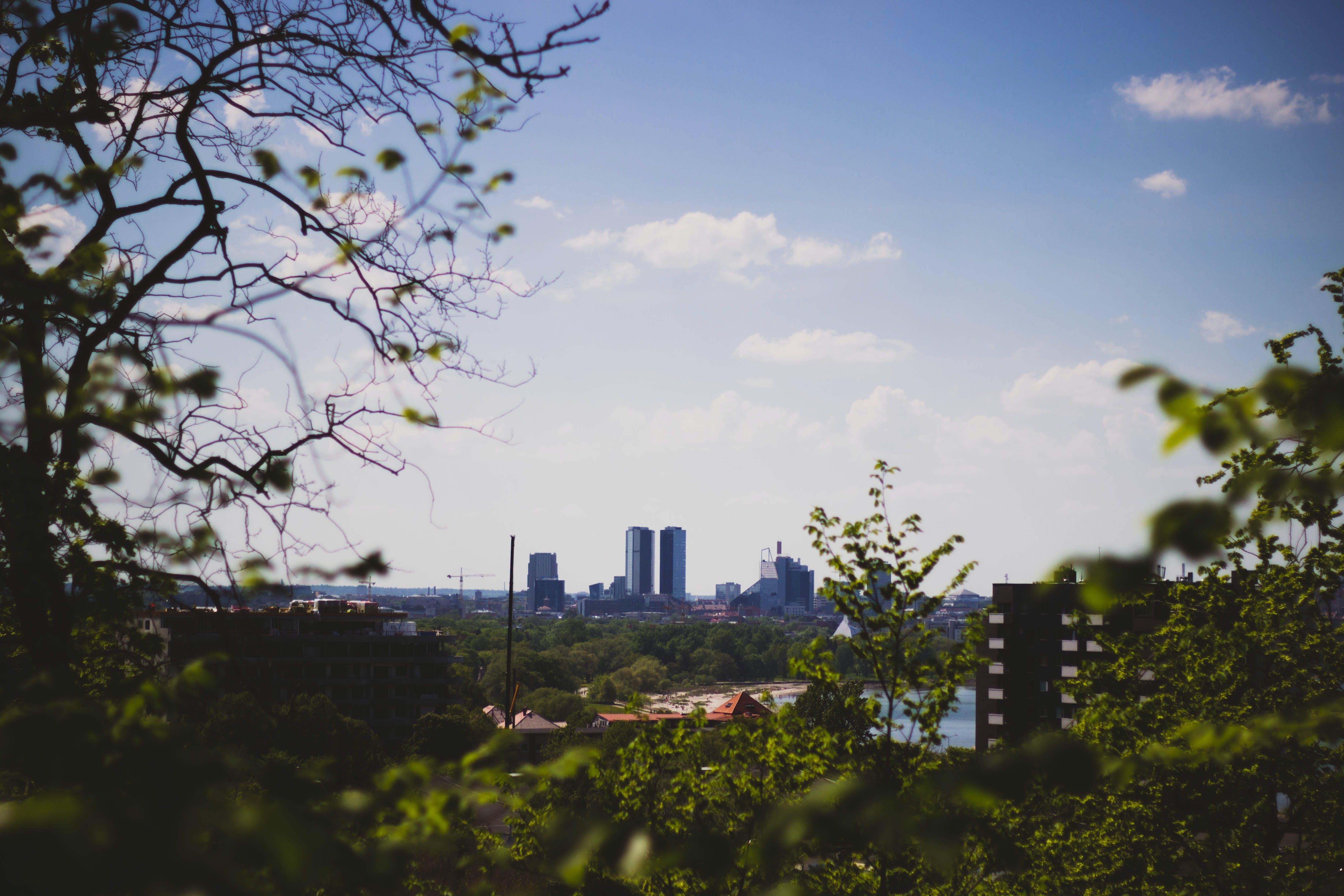Free stock photo of city, sky, buildings, tree