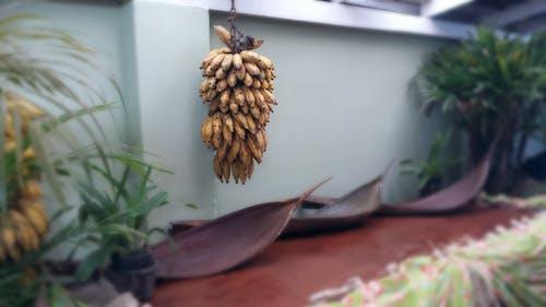 คลังภาพถ่ายฟรี ของ กล้วย, ต้นไม้, ผลไม้, สุขภาพดี