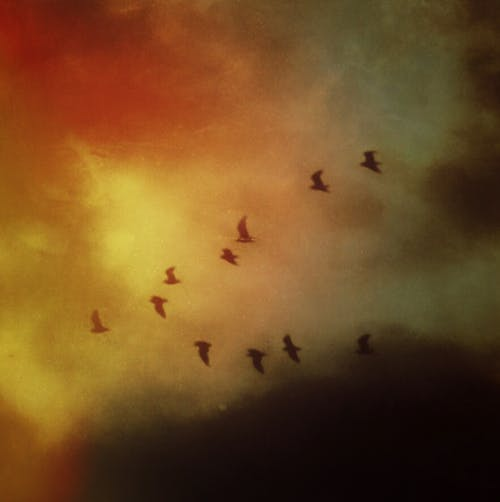 Gratis stockfoto met hemel, klassiek, kunst, lucht