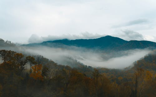 Brown Trees Near Mountain Under White Clouds