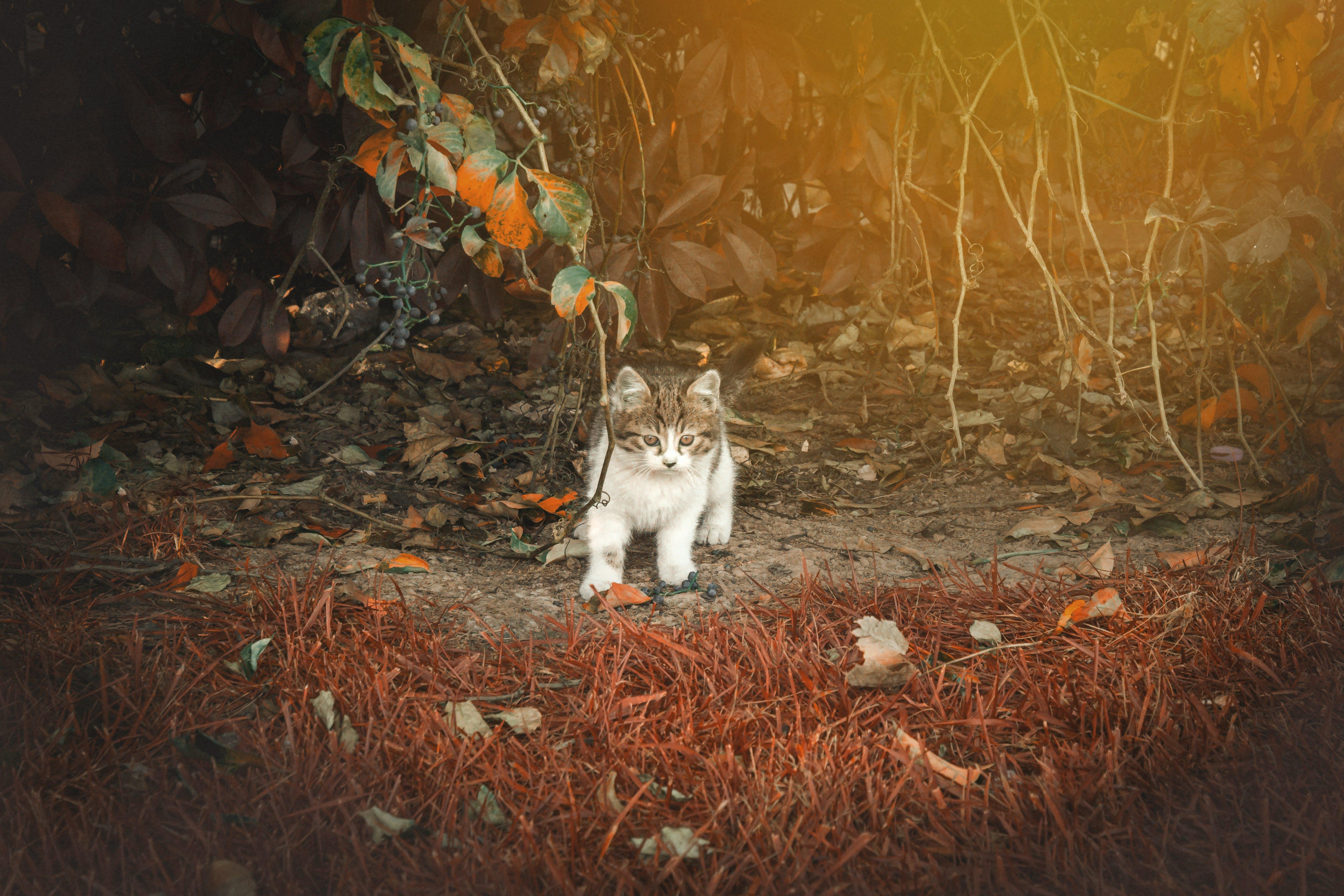 Free stock photo of animal, animal photography, autumn, cat