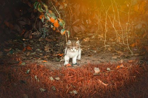 거리, 거리 사진, 고양이, 동물의 무료 스톡 사진