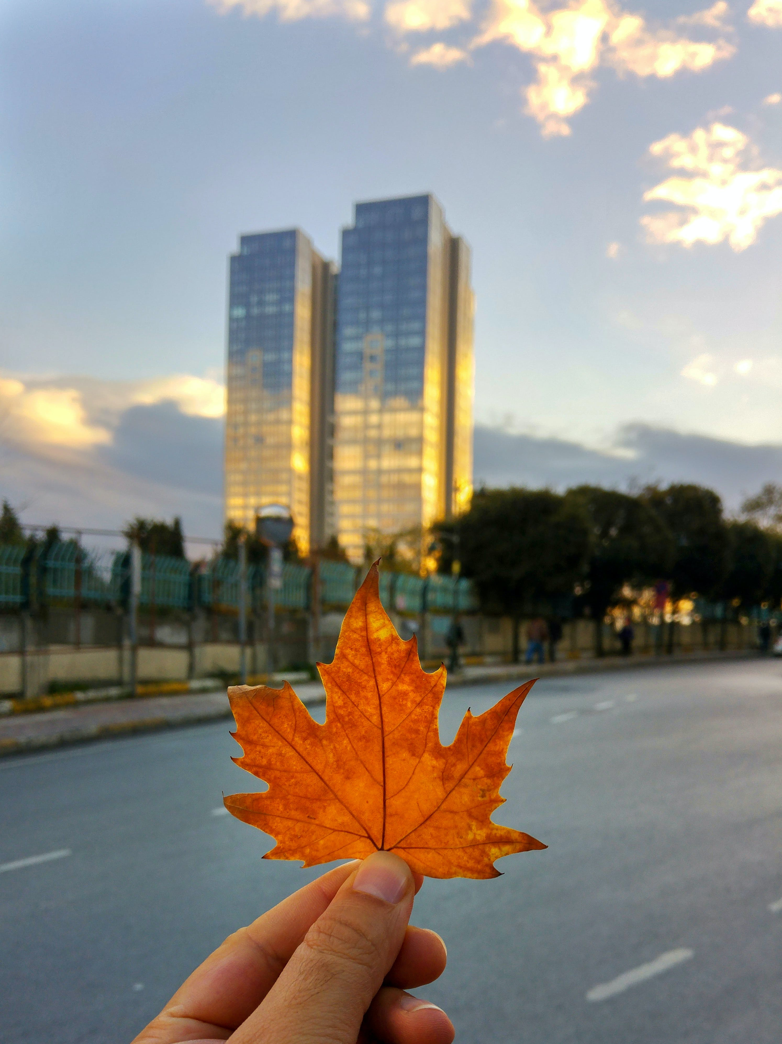 Free stock photo of autumn, city, dry leaf, fall