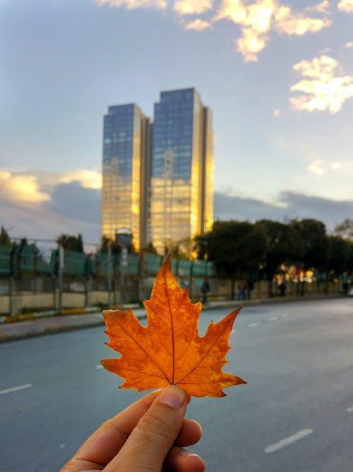 Gratis lagerfoto af by, hånd, Istanbul, kalkun