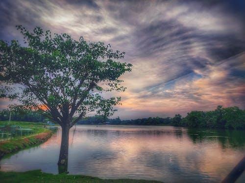 Fotos de stock gratuitas de árbol en el lago, clima helado, Fondo de pantalla 4k, fondo de pantalla de android