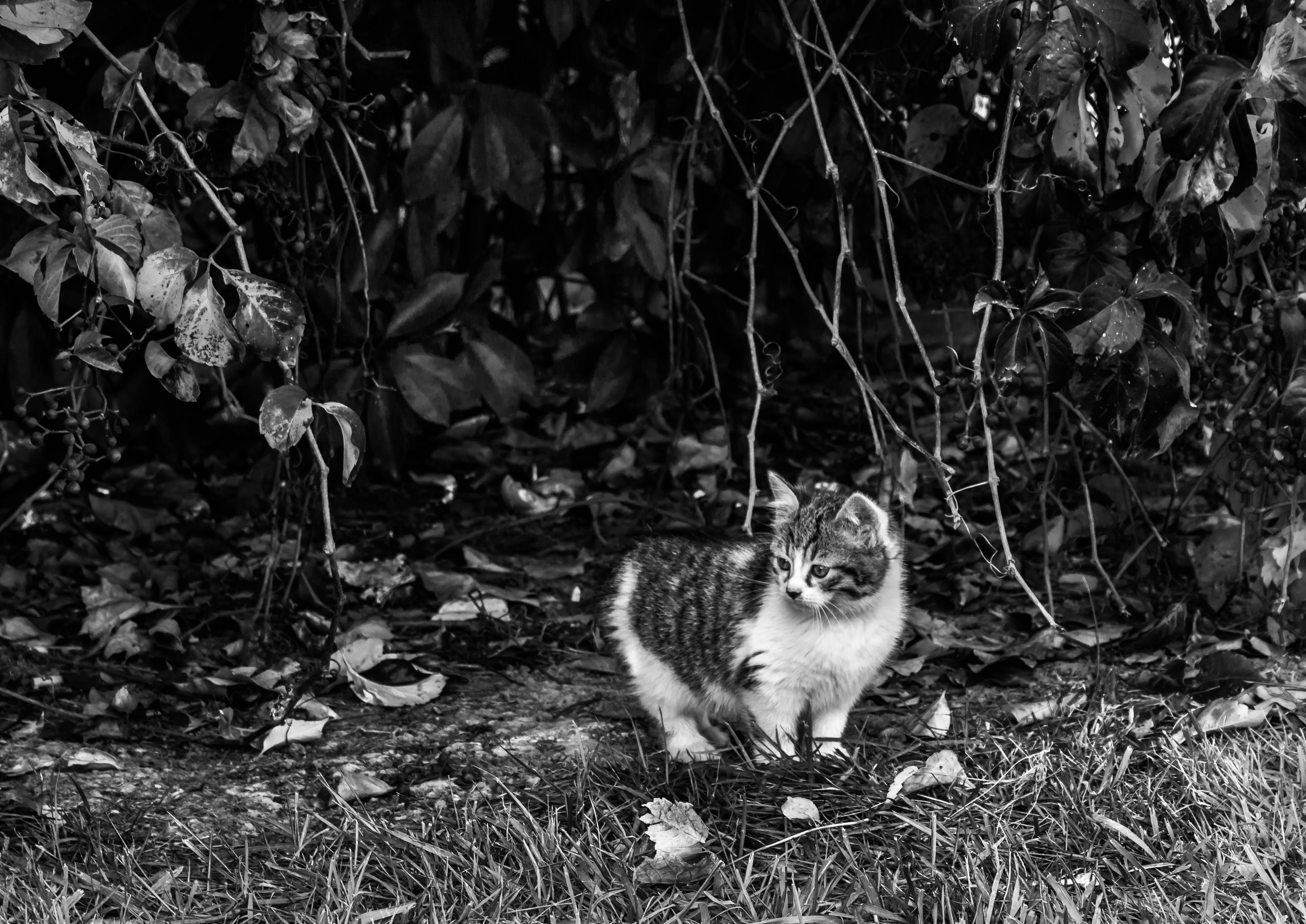 Free stock photo of black and white, cat, city, cute