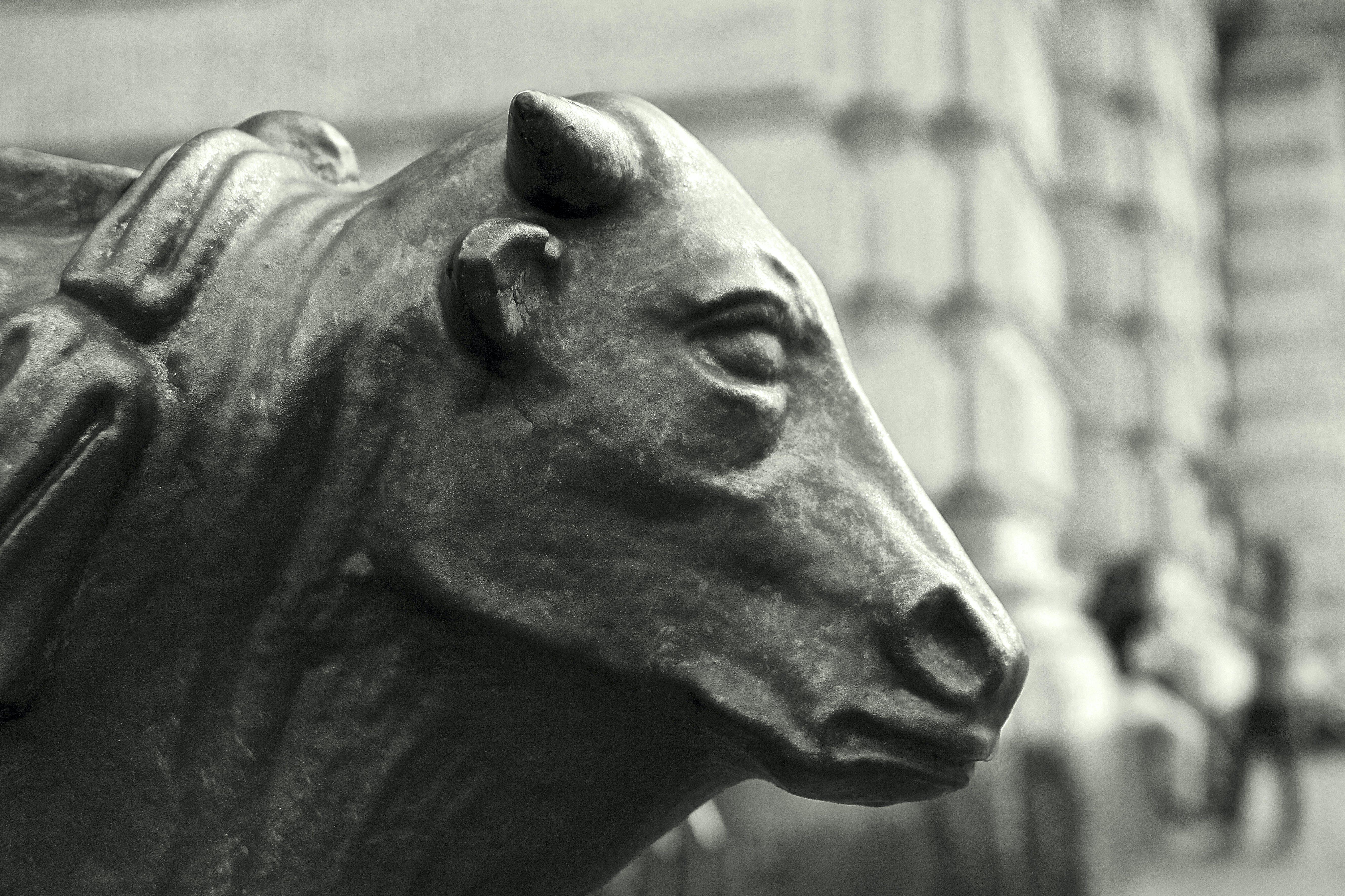 Free stock photo of black and white, bull, city lights, italia