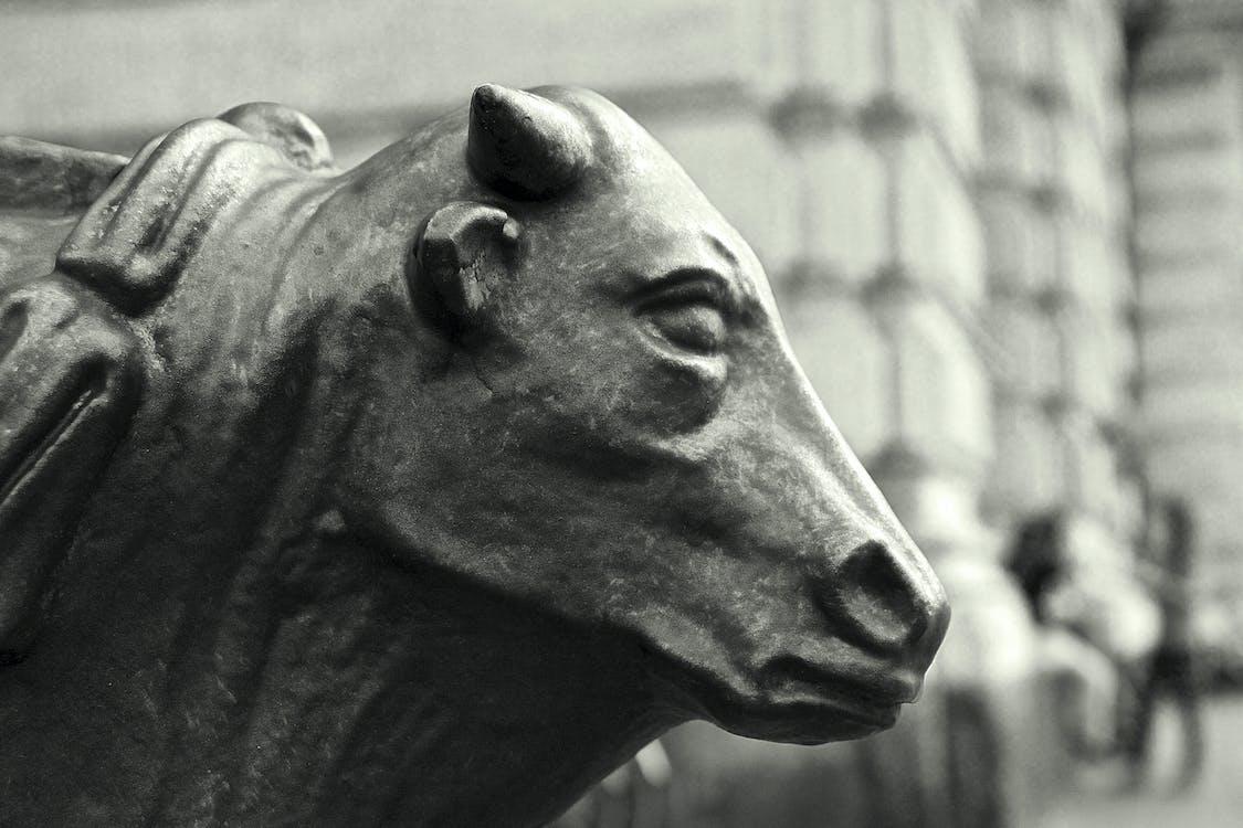 Free stock photo of bull, city lights, italia