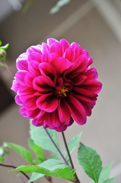 Gratis lagerfoto af blomster, natureza, primavera