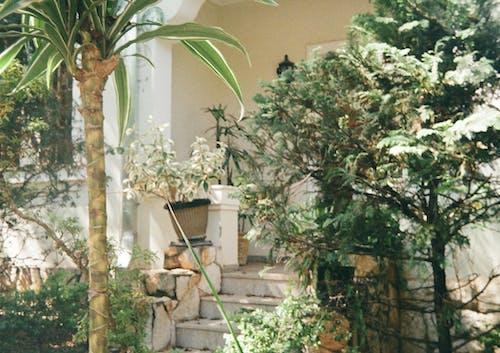 Free stock photo of backyard, front door, garden