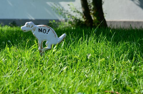 White Dinosaur Toy on Green Grass