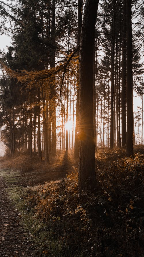 Picturesque view of trees growing in woodland with various vegetation under bright sunlight