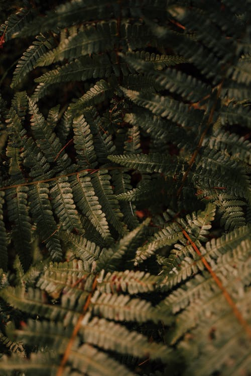 Background of fern leaves on thin stems growing in lush rainforest during daytime
