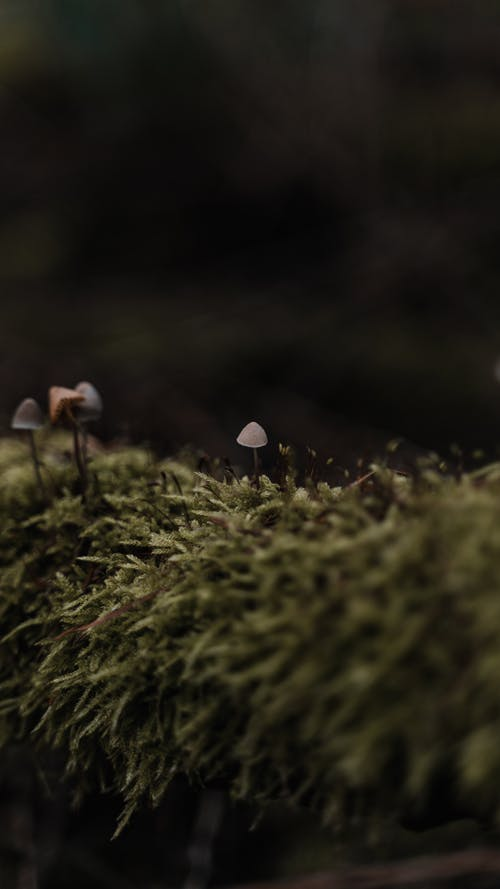 Small delicate mushrooms growing in forest