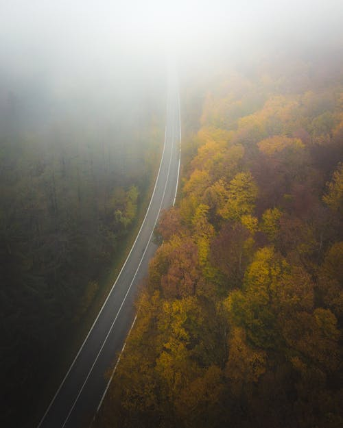 Drone view of picturesque forest near narrow asphalt road with marking lines in fog