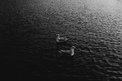 White seagulls on water surface