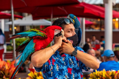 Free stock photo of covid, man, parrots