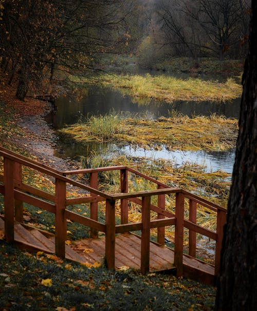 Immagine gratuita di acero, acqua, albero, autunno