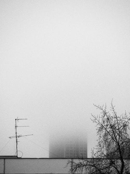 Безкоштовне стокове фото на тему «абстрактний, аналог, Вулиця, дерево»