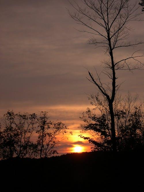 Free stock photo of summer, sun, sunset