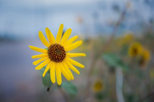 Bright yellow flower in blossom in field of countryside