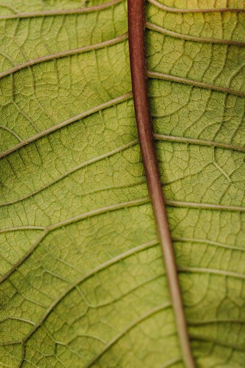 Immagine gratuita di avvicinamento, dettaglio, foglia verde