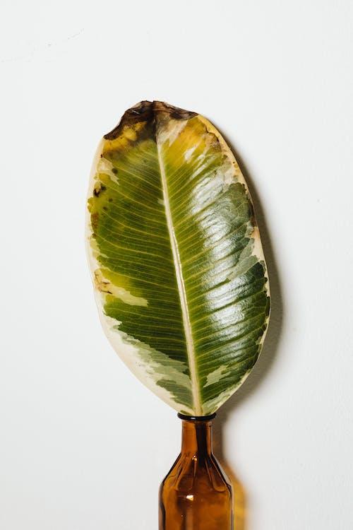 Green Leaf in a Vase