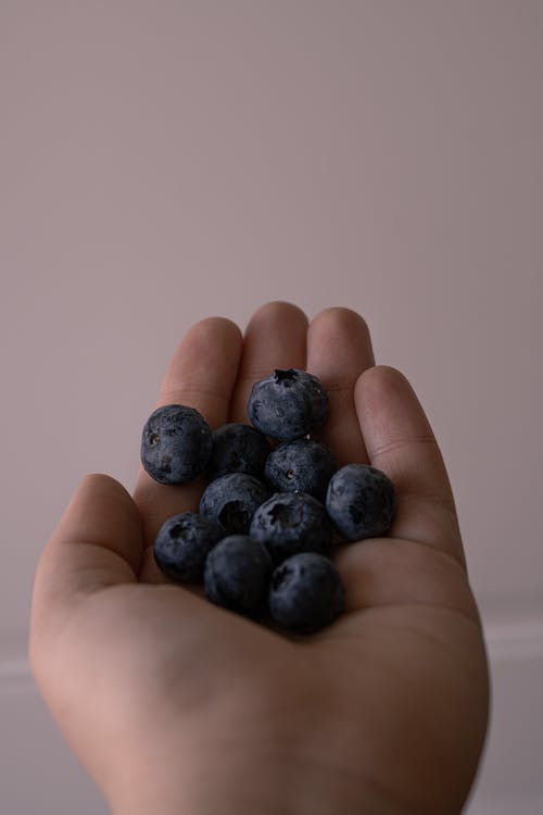 Unrecognizable person with handful of fresh blueberries picked from garden standing on pink background during harvest season on summer time
