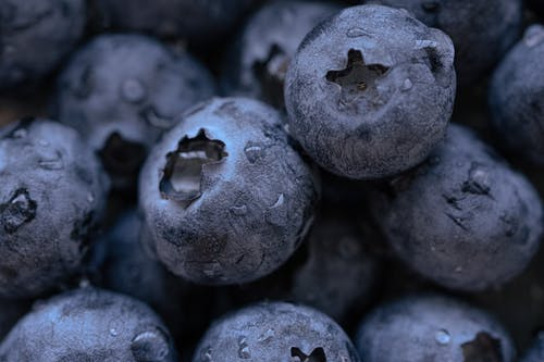 Closeup heap of fresh blueberries covered with drops of water during harvesting season in countryside on summer day in nature