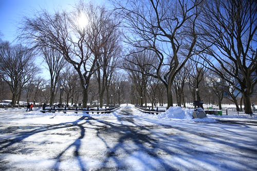 Free stock photo of central park, winter