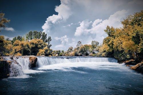 Immagine gratuita di 4k, acqua, albero