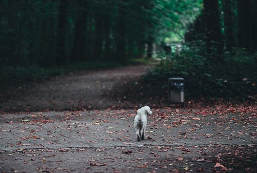 White Dog on Road With Fallen Leaves