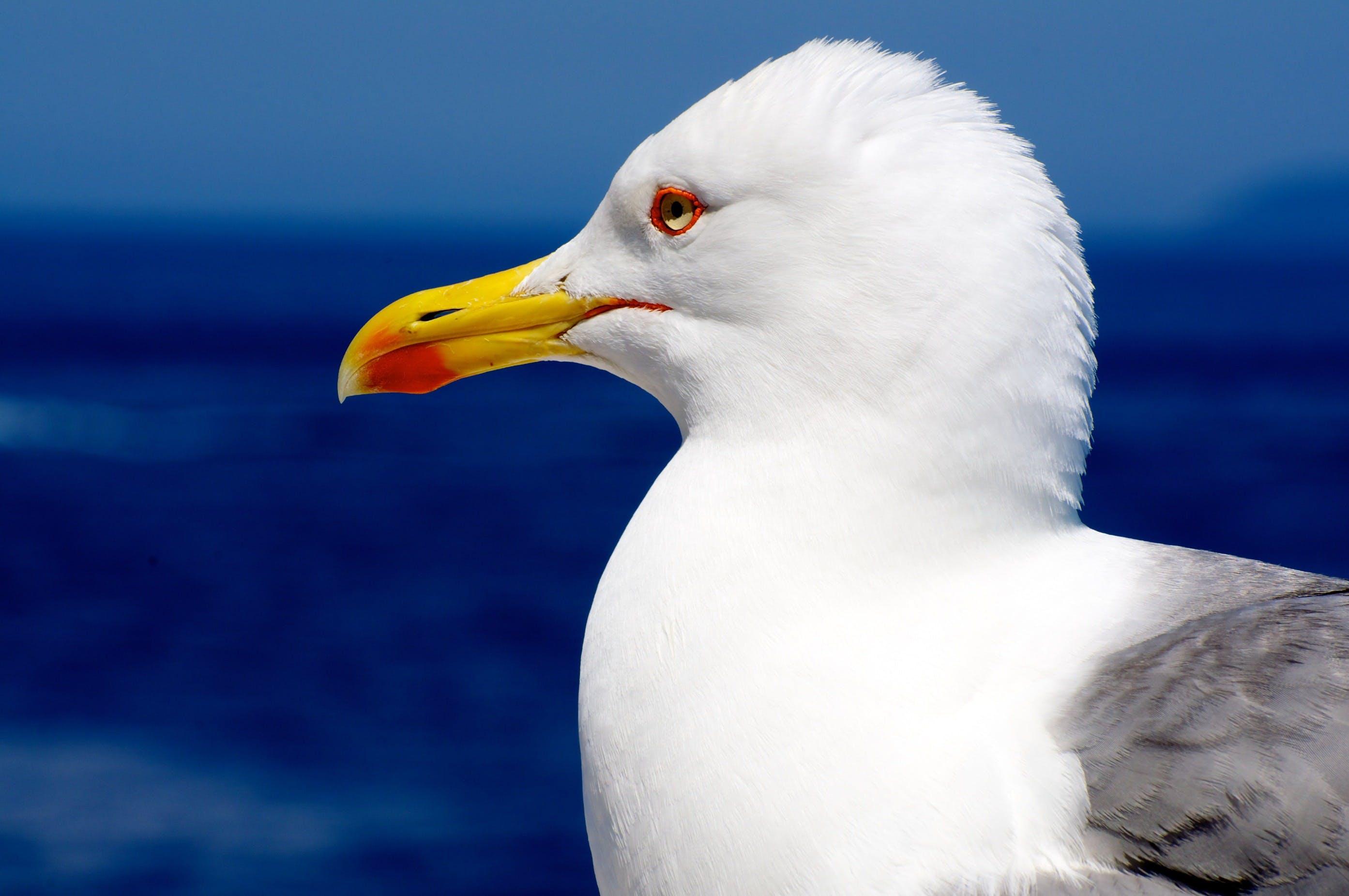 White Yellow and Gray Long Beak Bird Under Blue Sky