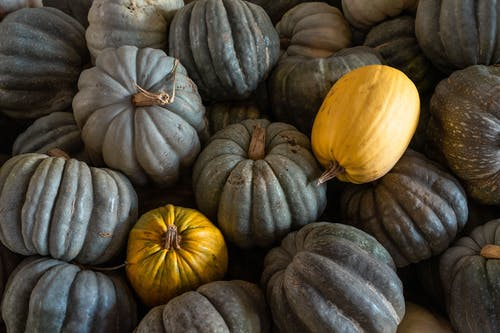 From above pile of fresh dark and yellow pumpkins with dried tails stacked together on autumn day during harvest season