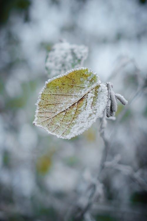 Бесплатное стоковое фото с ветвь, дерево, зима, лес