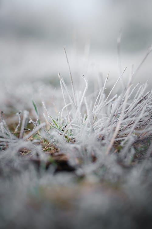 Бесплатное стоковое фото с глубина резкости, зима, крупный план, лес
