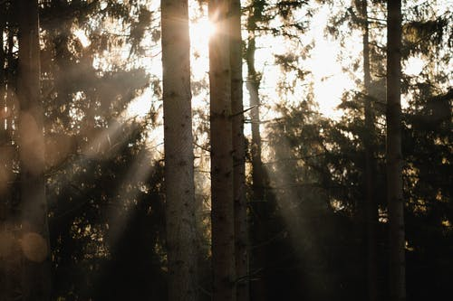 Бесплатное стоковое фото с atmosfera de outono, дерево, закат, легкий