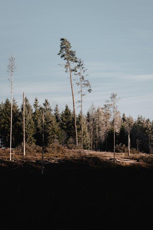 Бесплатное стоковое фото с atmosfera de outono, вода, дерево, закат