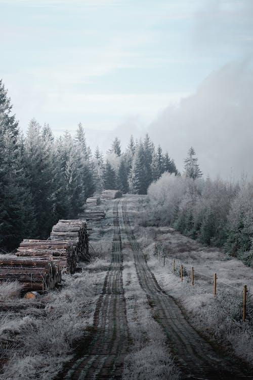 Бесплатное стоковое фото с гора, дерево, дорога, за городом