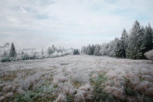 Бесплатное стоковое фото с дерево, за городом, зима, лед