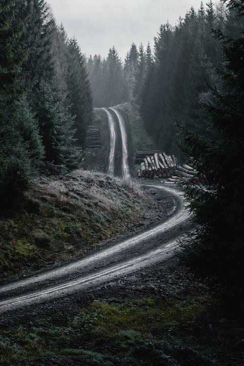 Бесплатное стоковое фото с вода, гора, дерево, дневной свет